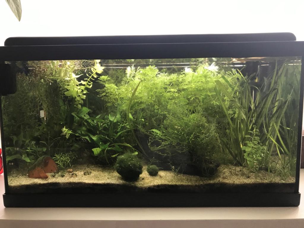 Mon premier aquarium : 60L planté - présentation. - Page 6 438c5010