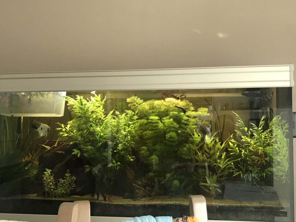 Plantes qui jaunisses, manque de fer 53e74f10