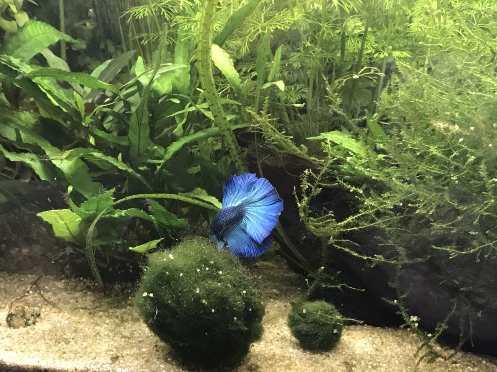 Mon premier aquarium : 60L planté - présentation. - Page 6 542c9c10