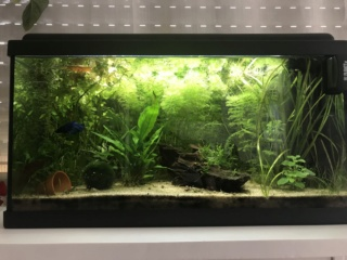 Aquascape asiatique - Page 2 60l12