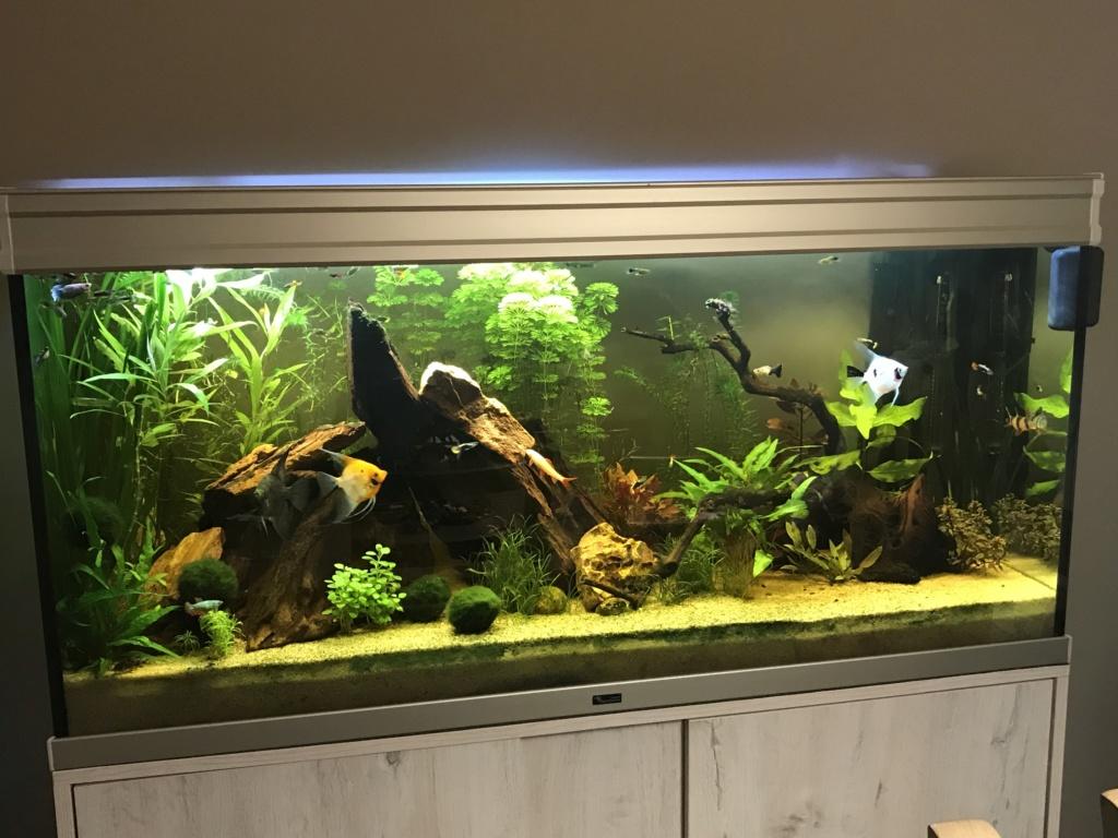 Mon 2ème aquarium 300 L planté  - Page 2 6817fa10
