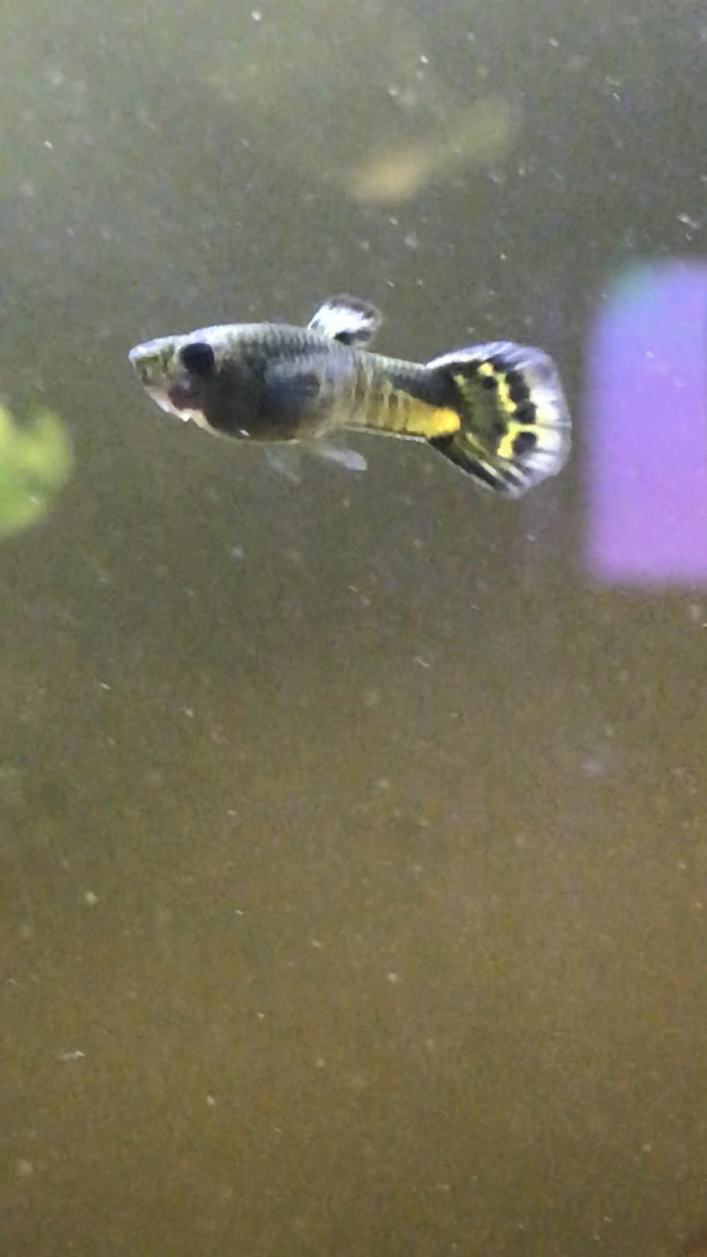 Mon 2ème aquarium 300 L planté  6e4ed810