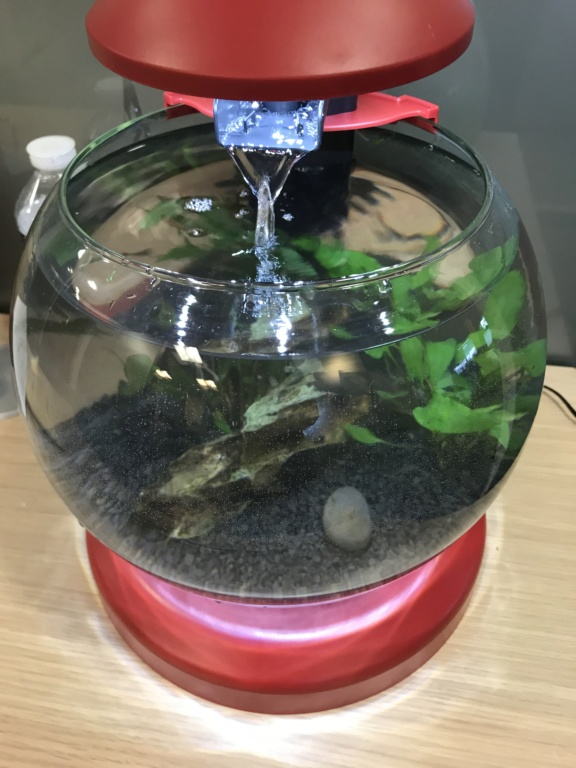 Aquarium boule cascade de Tetra (6,8L) 9e76e710