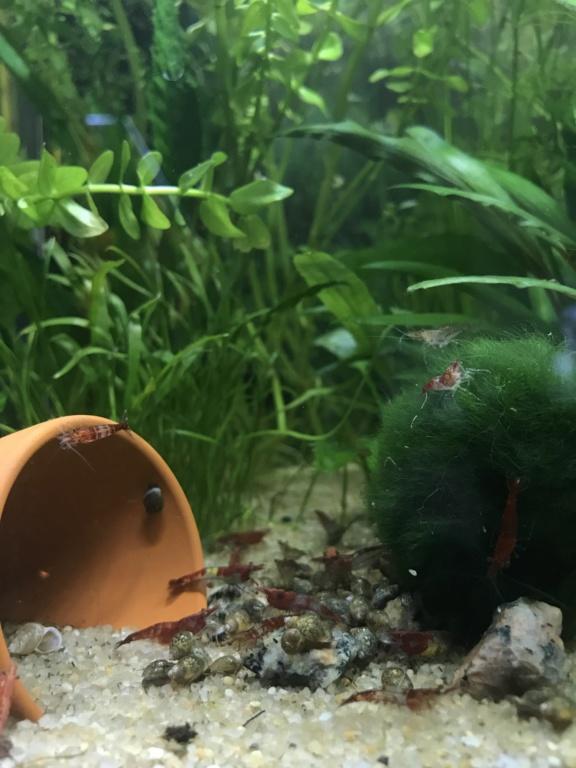 Mon premier aquarium : 60L planté - présentation. - Page 2 9f552810