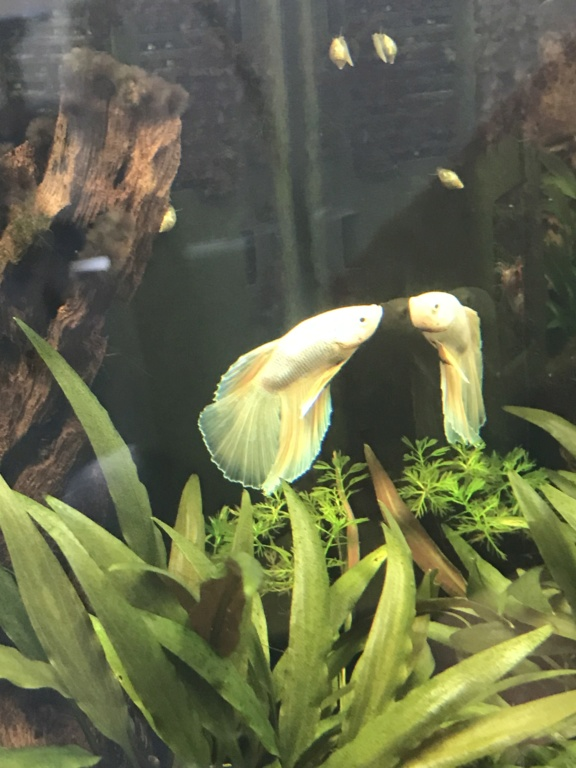 Mon 3ème aquarium 20L planté => passage en low tech ? A0334d10
