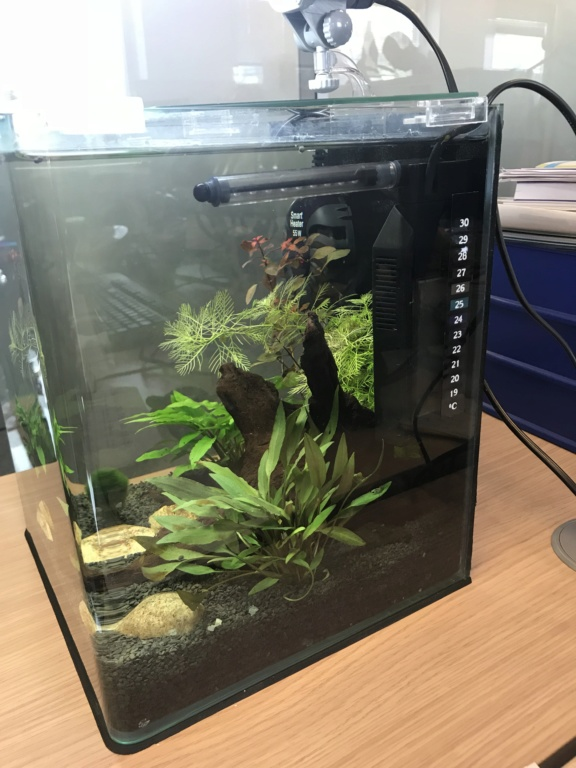 avis Dennerlé Aquarium Nano Cube Basic, 20L - LED, M - Page 2 A621b610
