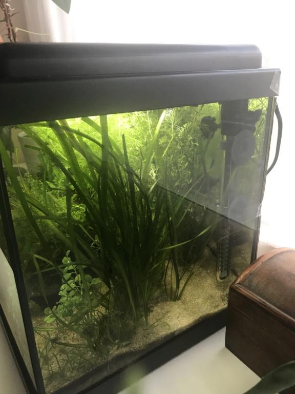 Mon premier aquarium : 60L planté - présentation. - Page 6 A6bf3d10