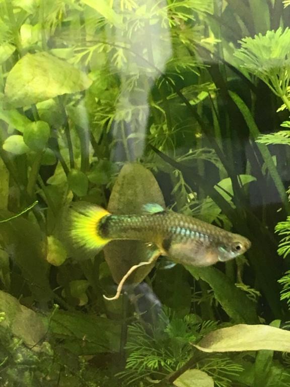 Mon premier aquarium 60L planté : nos nouveaux copains A83e3a10