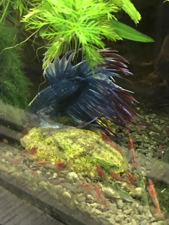 Mon 3ème aquarium 20L planté => passage en low tech ? B5157910