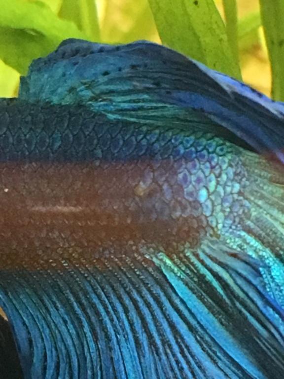 Mon premier aquarium 60L planté : nos nouveaux copains B7924410