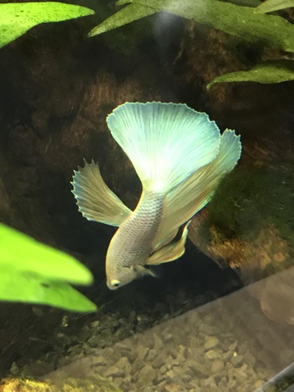 Mon 3ème aquarium 20L planté => passage en low tech ? B7fd4310