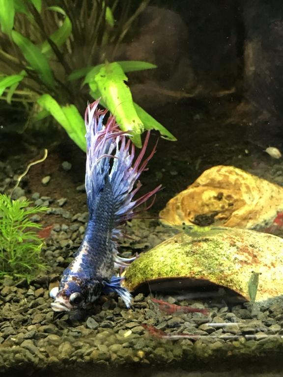 Mon 3ème aquarium 20L planté => passage en low tech ? C31e2510