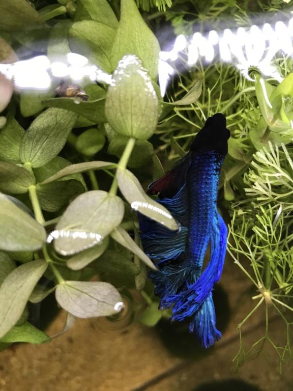 Mon premier aquarium 60L planté : nos nouveaux copains Cf364d10