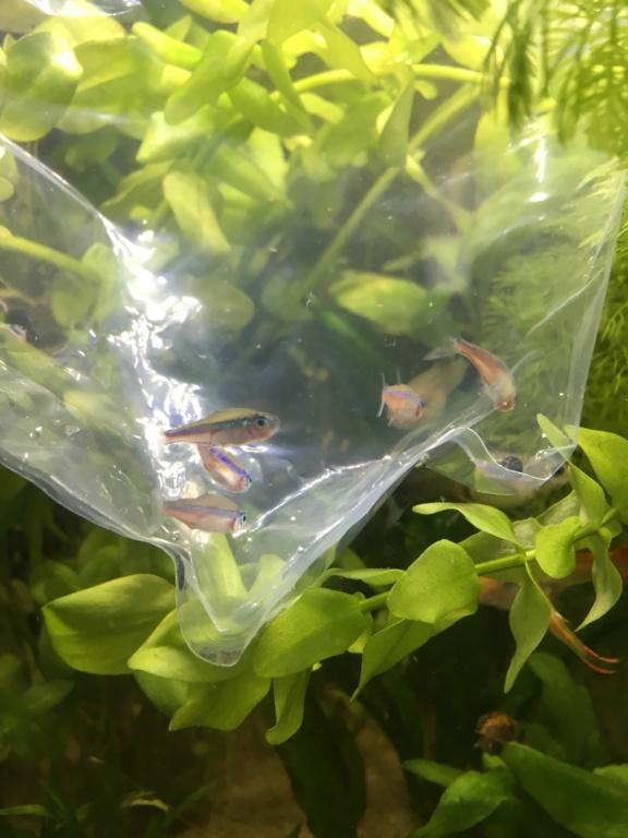 Mon premier aquarium 60L planté : nos nouveaux copains Deea5c10