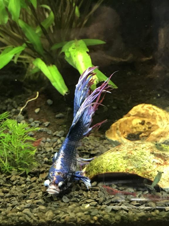 Mon 3ème aquarium 20L planté => passage en low tech ? E7c1cf10