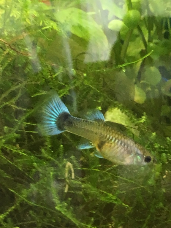 Mon premier aquarium 60L planté : nos nouveaux copains Ea613210
