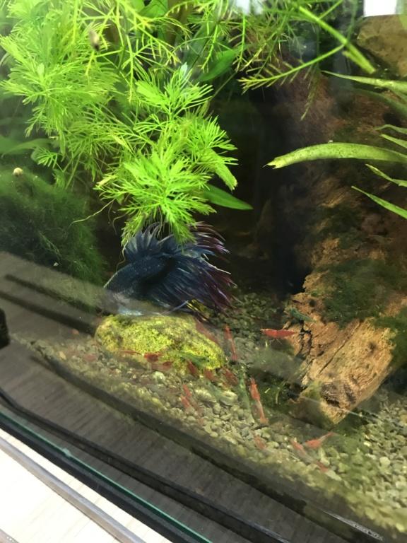 Mon 3ème aquarium 20L planté => passage en low tech ? Fd639910