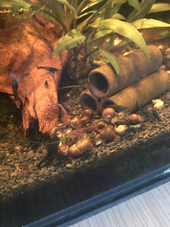 Mon 3ème aquarium 20L planté => passage en low tech ? - Page 2 Febffa10