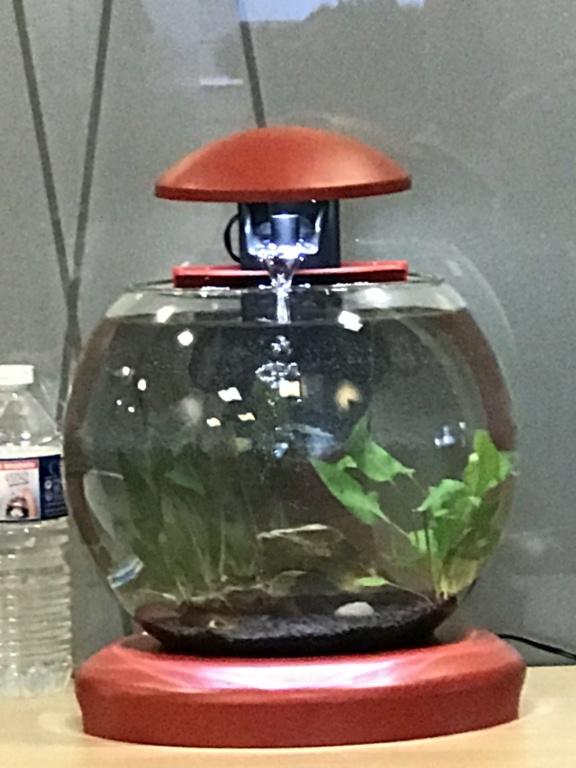 Aquarium boule cascade de Tetra (6,8L) Image18