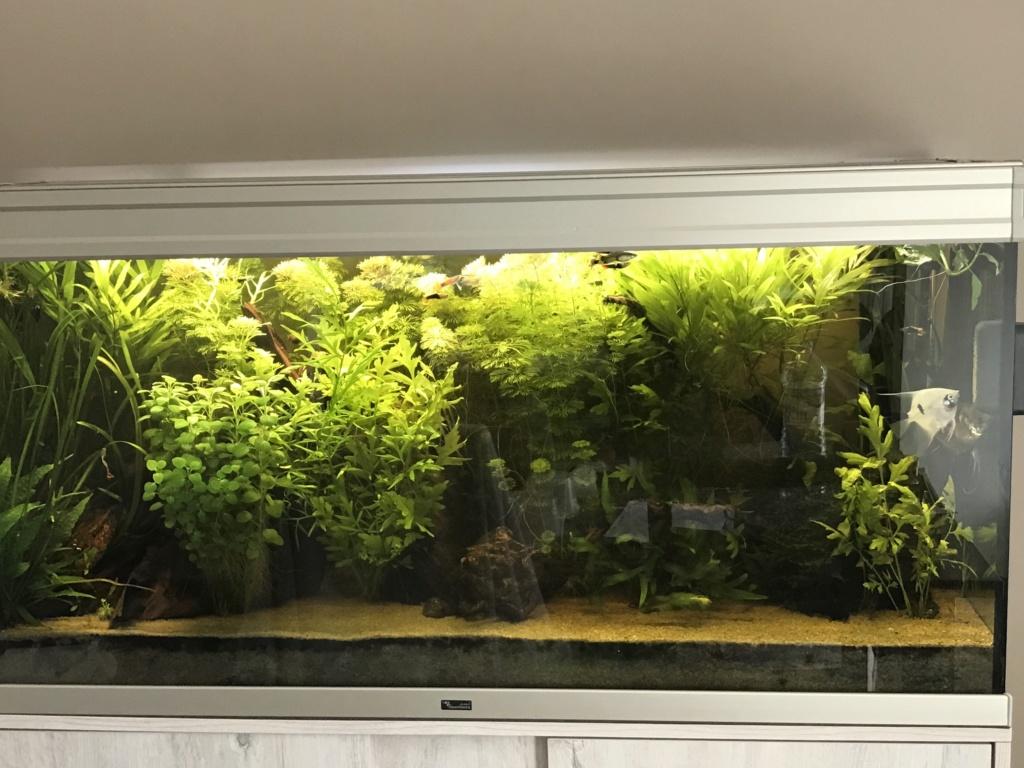 Mon 2ème aquarium 300 L planté  - Page 2 Img_0010
