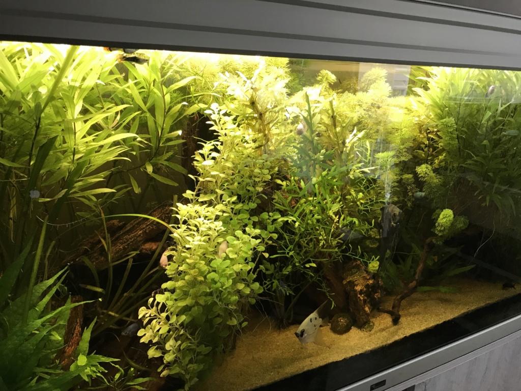 Plantes qui jaunisses, manque de fer Img_0810