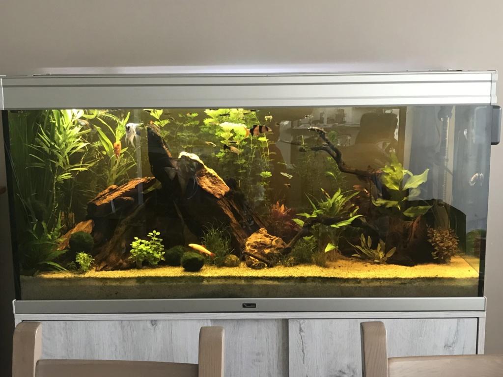 Mon 2ème aquarium 300 L planté  - Page 2 Img_7610
