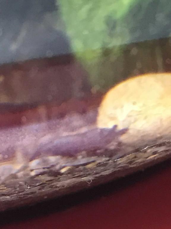 Aquarium boule cascade de Tetra (6,8L) Img_8112