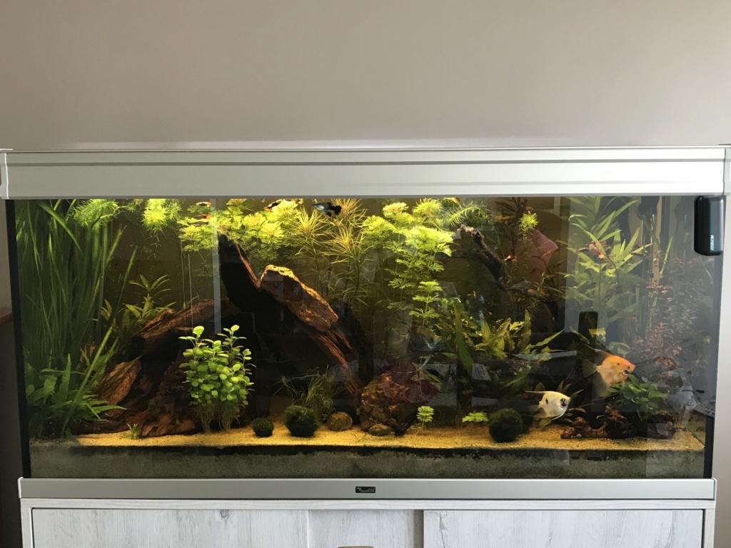 Mon 2ème aquarium 300 L planté  - Page 2 Img_8510