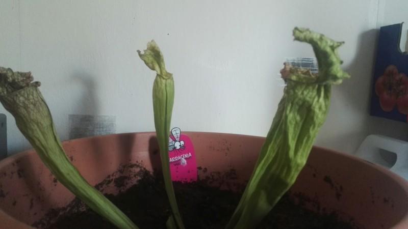 Au secour ma plante va mal !! 20180710