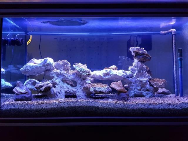 Projet aquarium aqualantis fusion 120x50x70 - Page 2 1010