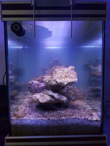 Projet aquarium aqualantis fusion 120x50x70 - Page 2 313