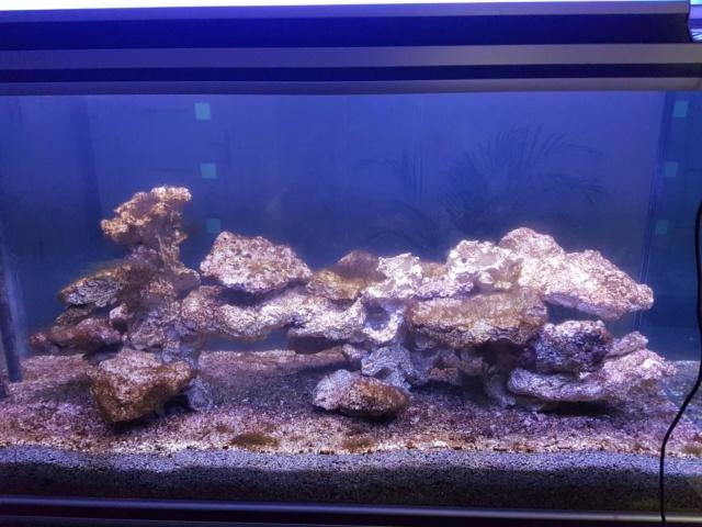 Projet aquarium aqualantis fusion 120x50x70 - Page 2 413