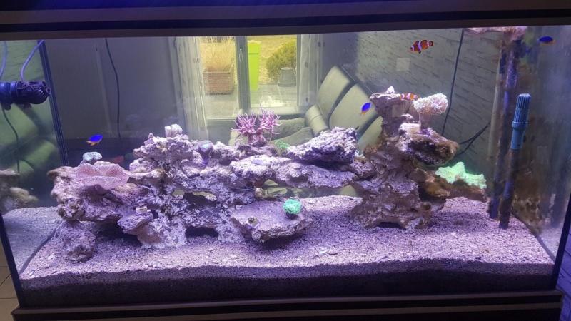 Projet aquarium aqualantis fusion 120x50x70 - Page 3 Ab10