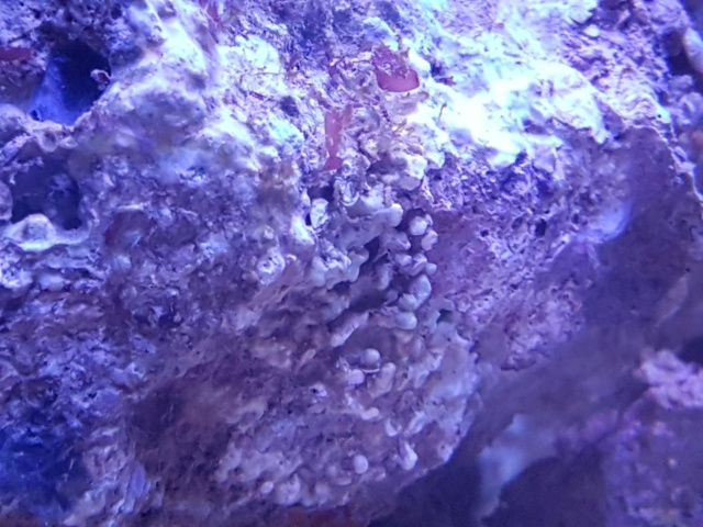 Projet aquarium aqualantis fusion 120x50x70 - Page 2 B11