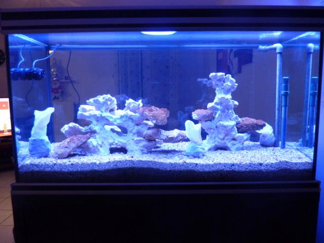 Projet aquarium aqualantis fusion 120x50x70 - Page 2 P1010812