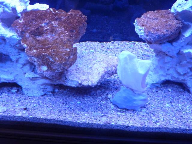 Projet aquarium aqualantis fusion 120x50x70 - Page 2 P1010815