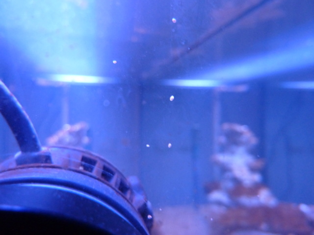 Projet aquarium aqualantis fusion 120x50x70 - Page 2 P1010816