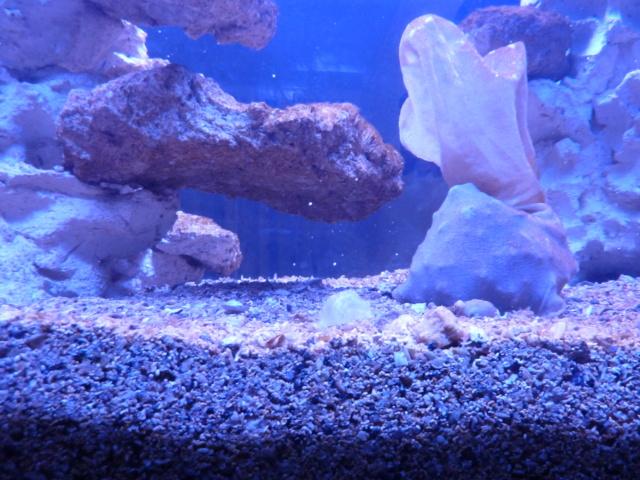 Projet aquarium aqualantis fusion 120x50x70 - Page 2 P1010817