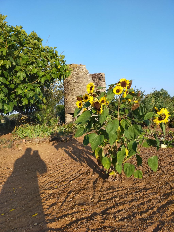 Michou - un jardin de curiosités et de rêves, voici l'oasis botanique de Marie-Jo et de Michel  (44) - Page 19 16305112