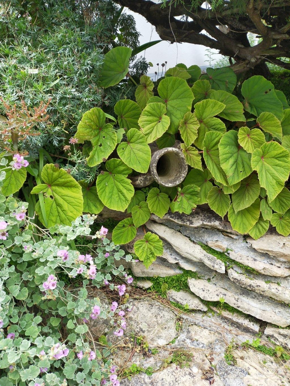 Michou - un jardin de curiosités, botanique - L'oasis de Michel  (44) - Page 9 Img20109