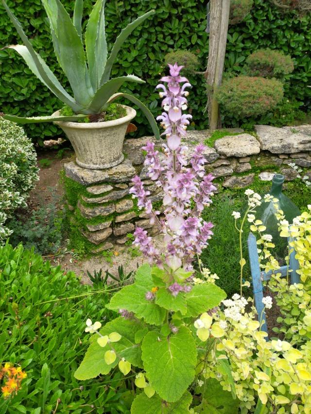 Michou - un jardin de curiosités, botanique - L'oasis de Michel  (44) - Page 9 Img20157