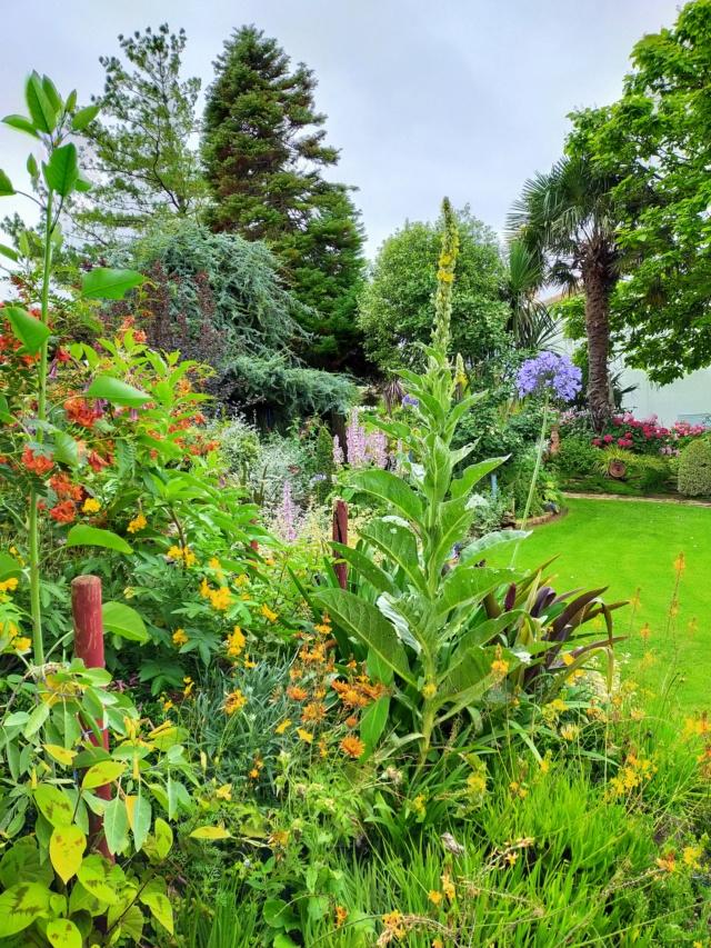 Michou - un jardin de curiosités, botanique - L'oasis de Michel  (44) - Page 9 Img20159