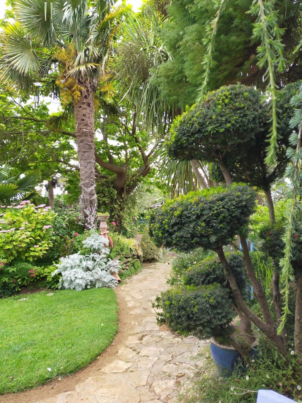 Niwaki, la taille en nuage, l'art topiaire, dans le jardin de Michel Img20226