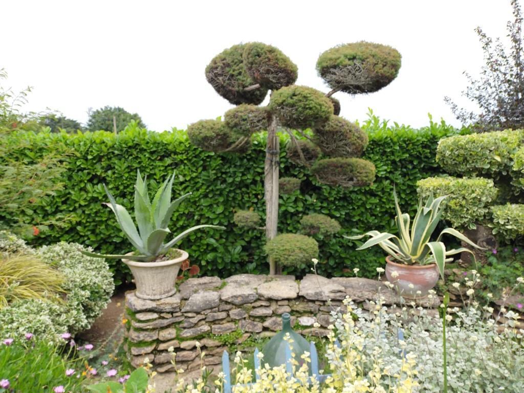 Niwaki, la taille en nuage, l'art topiaire, dans le jardin de Michel Img20228