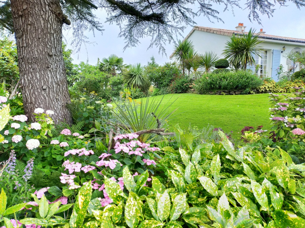 Michou - un jardin de curiosités, botanique, le moulin, l'oasis de Michel  (44) - Page 8 Img20275