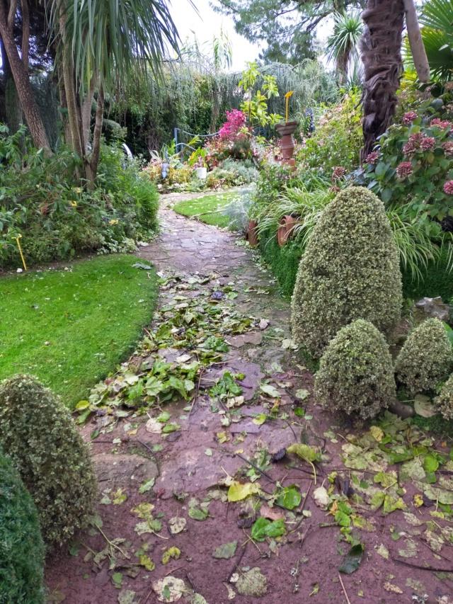 La tempête du 3 octobre, dans le jardin de Michou. Img20382