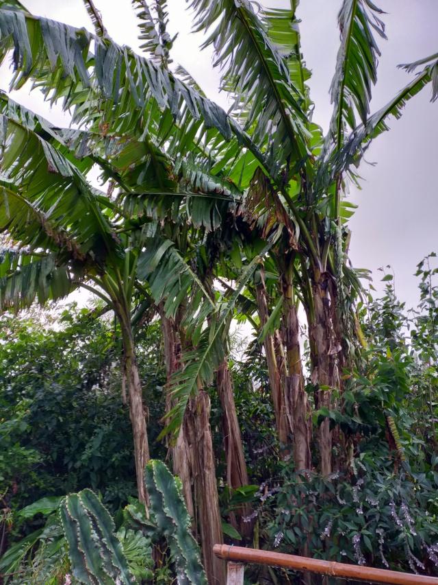 La tempête du 3 octobre, dans le jardin de Michou. Img20383