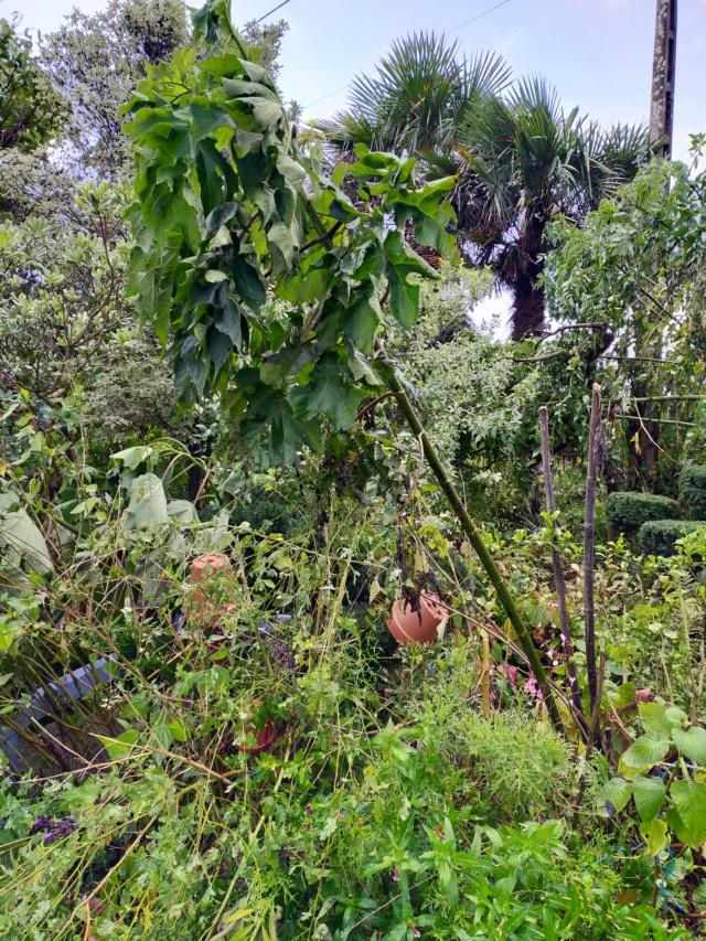 La tempête du 3 octobre, dans le jardin de Michou. Img20384