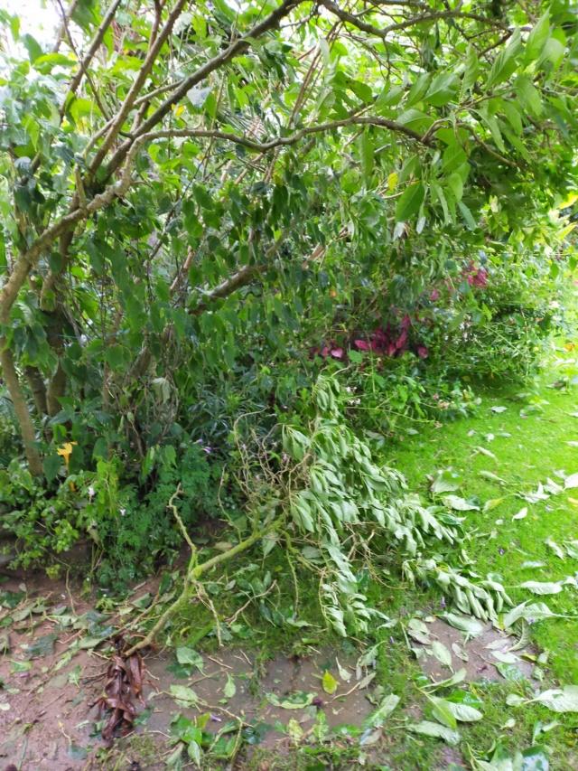 La tempête du 3 octobre, dans le jardin de Michou. Img20385