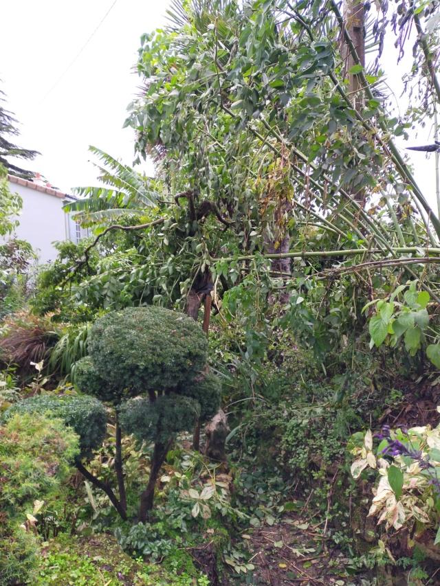 La tempête du 3 octobre, dans le jardin de Michou. Img20386